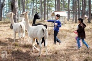 Đến Đà Lạt,nhất định phải ghé thăm sở thú đẹp như ở trời Tây